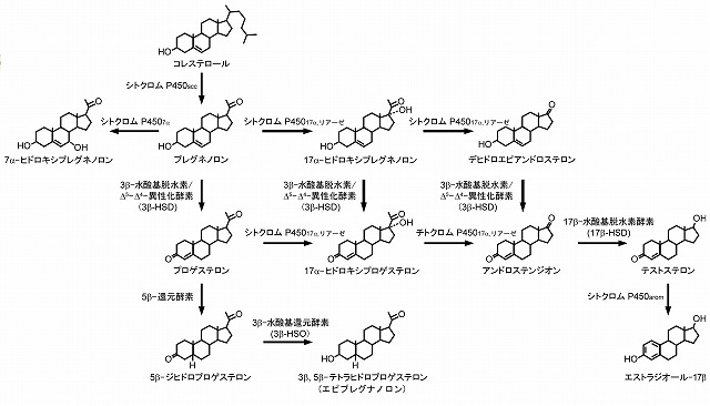 steroid synthesis is the function of the